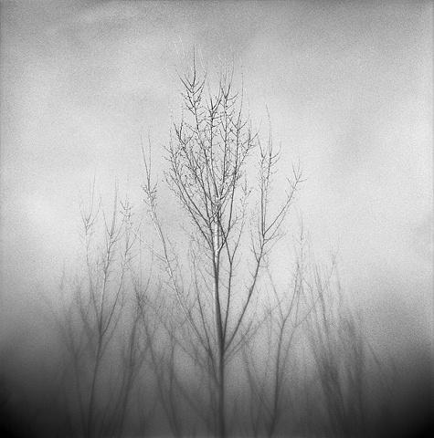 """ Rising Tree """