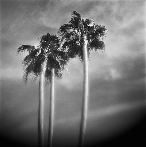 """ Three Palms """