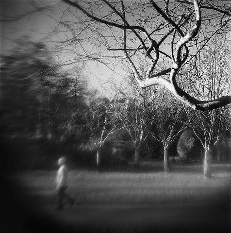 """"""" Pursuing Tree """""""