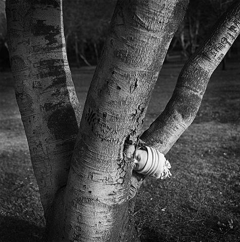 """ Stuck In Tree """
