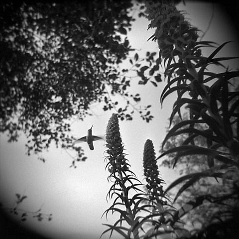 """ Hummingbird """