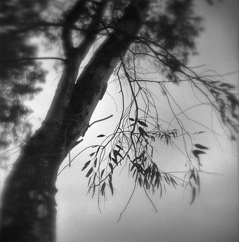 """"""" Broken Branch """""""
