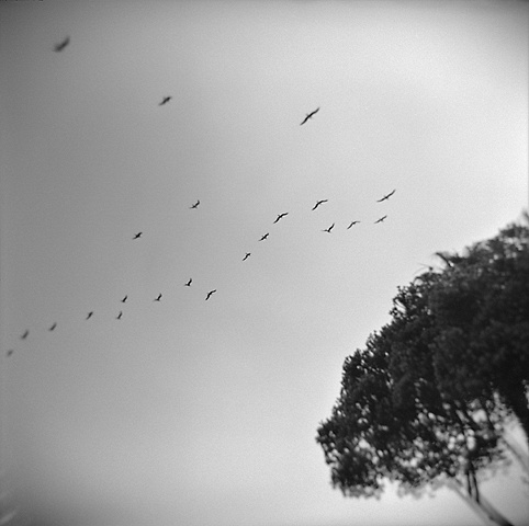 """ Seabirds and Tree """