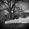 """ White Fence """