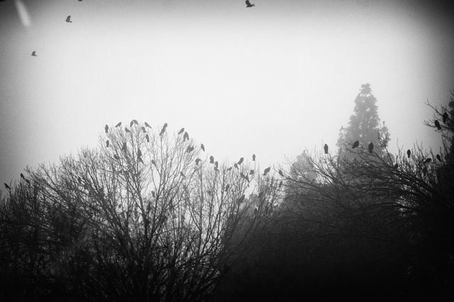 foggy flock