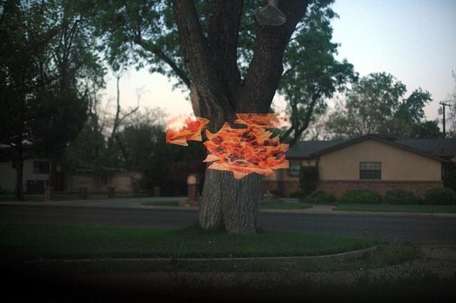 Tree nachos