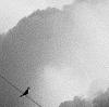 bird, wire, clouds
