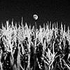 Moon over corn