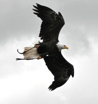 American Eagle, Flight