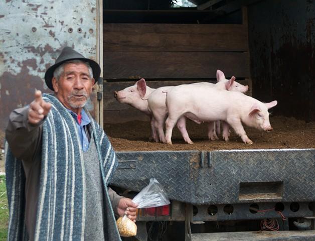 Pigs for sale in Otavalo, Ecuador