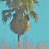 Florida Palm