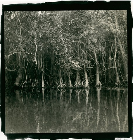 Mangrove Trees, New River, Belize