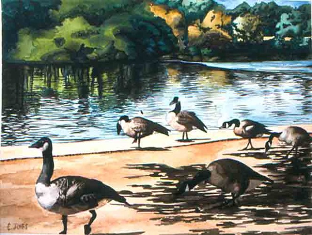 Geese Near River