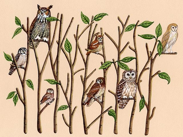 Owl Wood