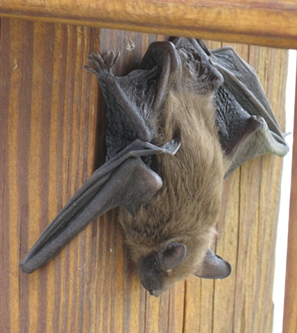 Porch bat