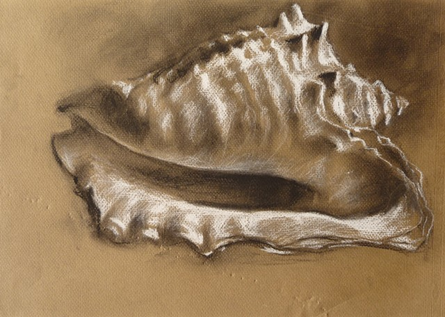conch, charcoal, conte, sketch, hawaii