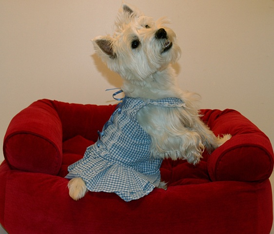 Hyde Bark sells dog clothes, as modeled by Zoe