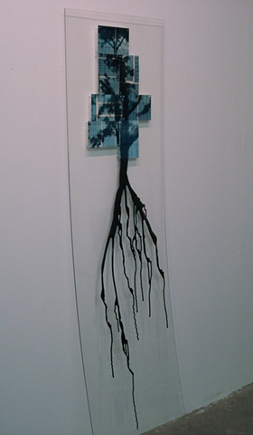shadow tree drips