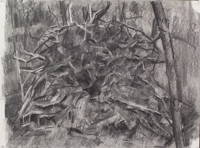 Tree Stump / Cathedral Charcoal on Paper 18 x 24 2015