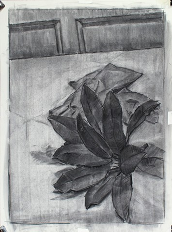 Sunken Road, Magnolia Leaves Charcoal on Paper 24 x 18 2017