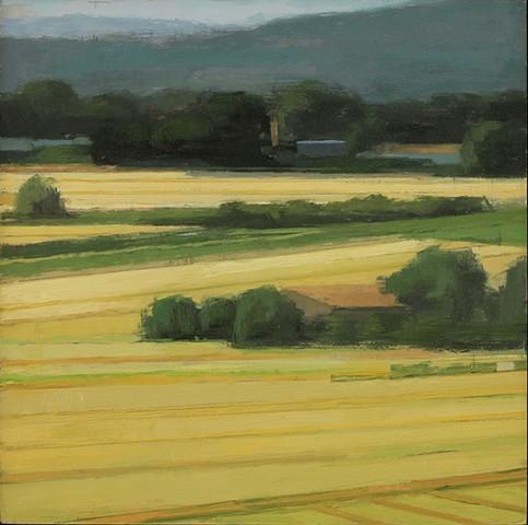 Fields in Light