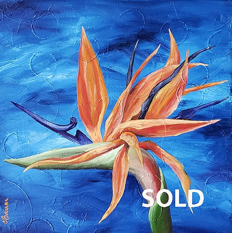 Strelreginae - SOLD