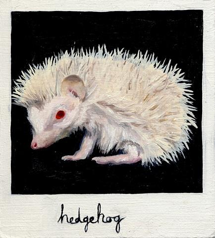 (Albino) Hedgehog