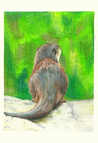Contemplative Otter