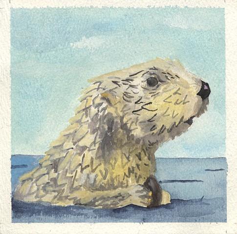 Sea Otter Mussel