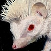 (Albino) Hedgehog