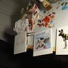 Animal Polaroid