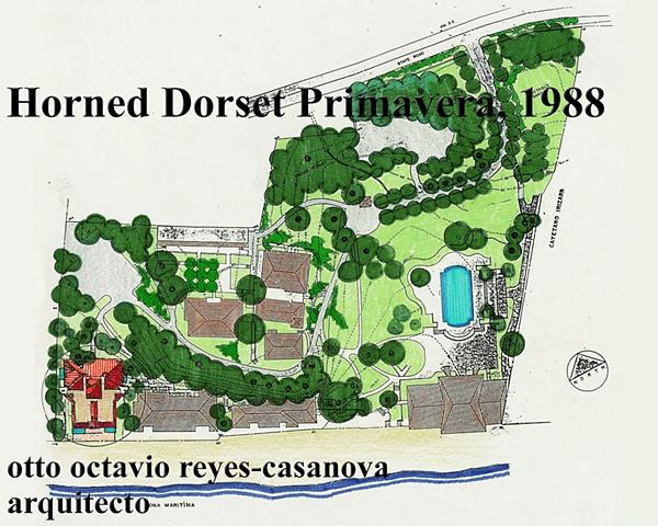 Horned Dorset Primavera, 1988