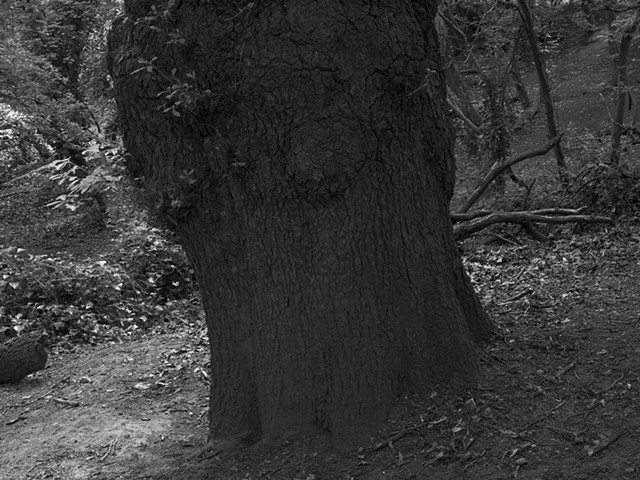 Hampstead Heath, imgp2739