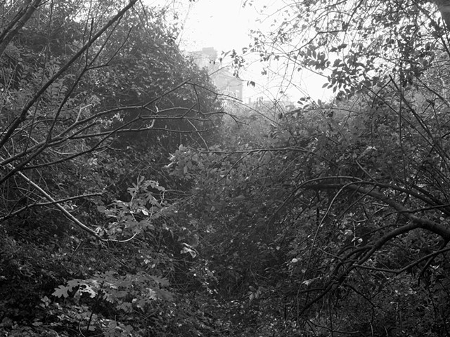 Hampstead Heath, imgp2035