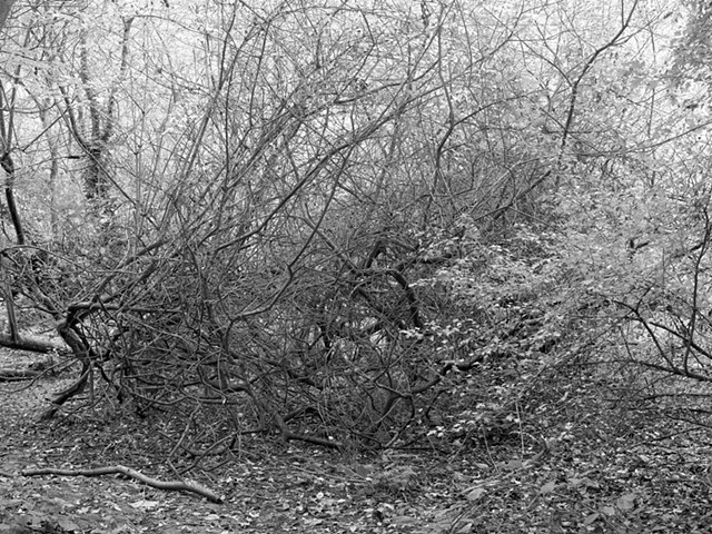 Hampstead Heath, imgp1381