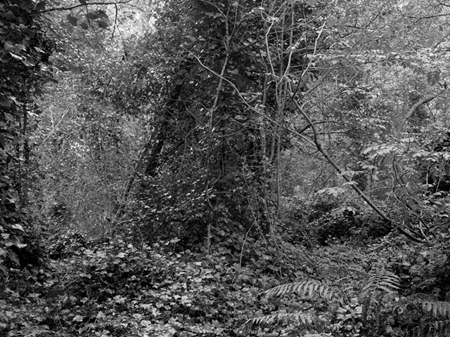 Hampstead Heath, imgp1535