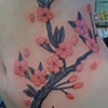 Cherry blossoms on side no outline