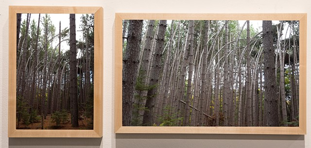 Chris Lapierre UFO documentation, tree series