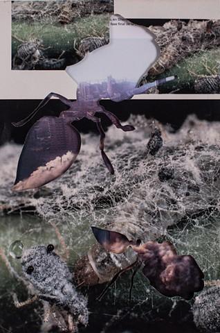 Ants/ Building demolition
