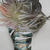 Lab (anemone)