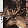 North Korean Army/ Woodland Caribou
