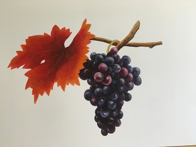 Northern Virginia Magazine- Petit Verdot