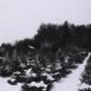 Winter Landscape II