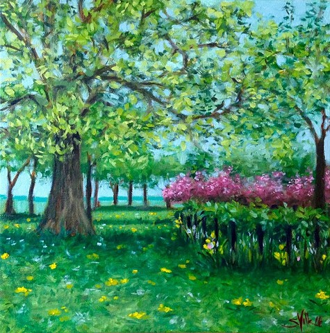 Park Study in May