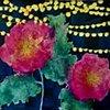 Peonies Under Garden Lights