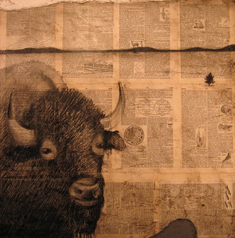 Buffalo Field Study In Charcoal