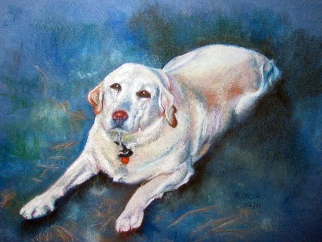 Yellow Labrador portrait