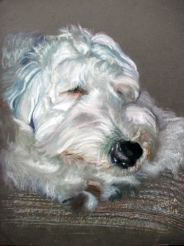 sheep dog portrait