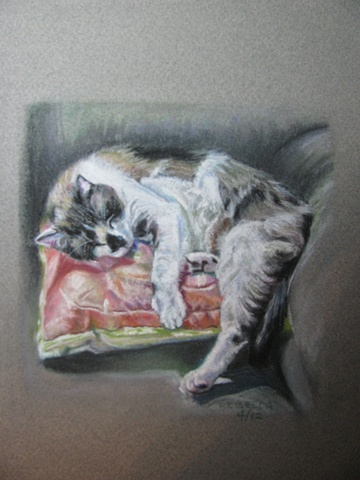 Cat napping on a pillow