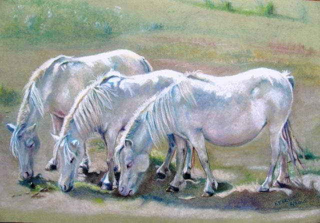 Minature horses grazing in a field